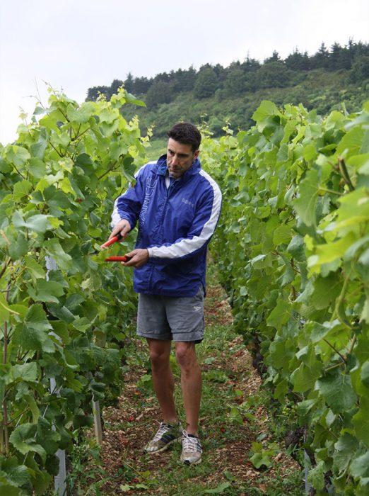 Bruno Lorenzon rognant les vignes